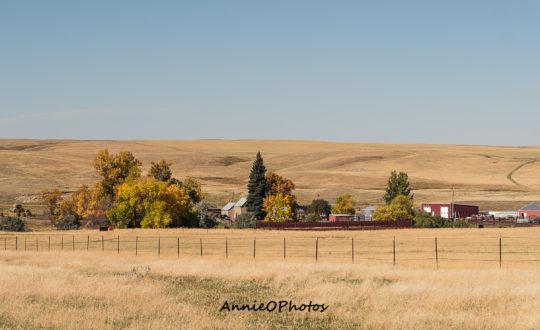 "Top Notch Angus ""Ramberg"" Ranch"